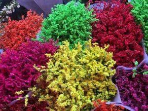 Hoa giấy là sản phẩm kinh doanh hoa cây cảnh Tết